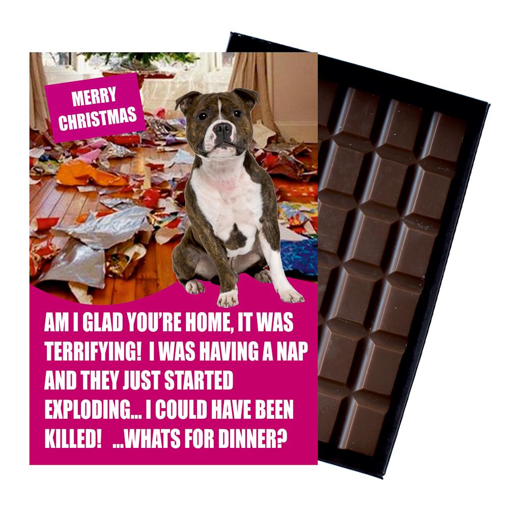 Staffordshire Bull Terrier Funny